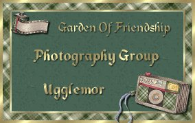 Photography Group -Ugglemor
